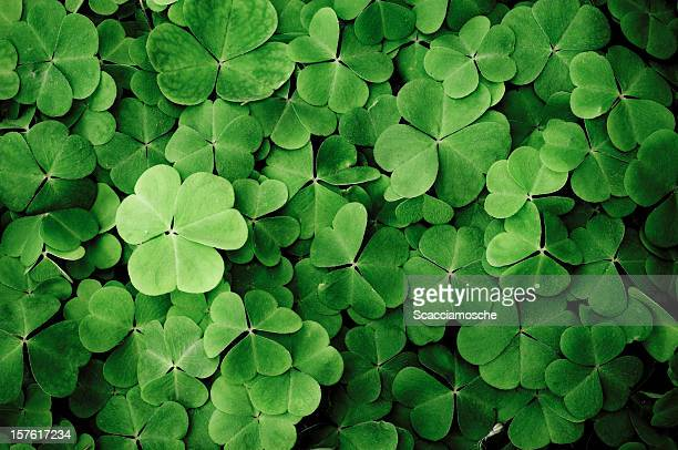 close up of a bunch of green clover - groene kleuren stockfoto's en -beelden