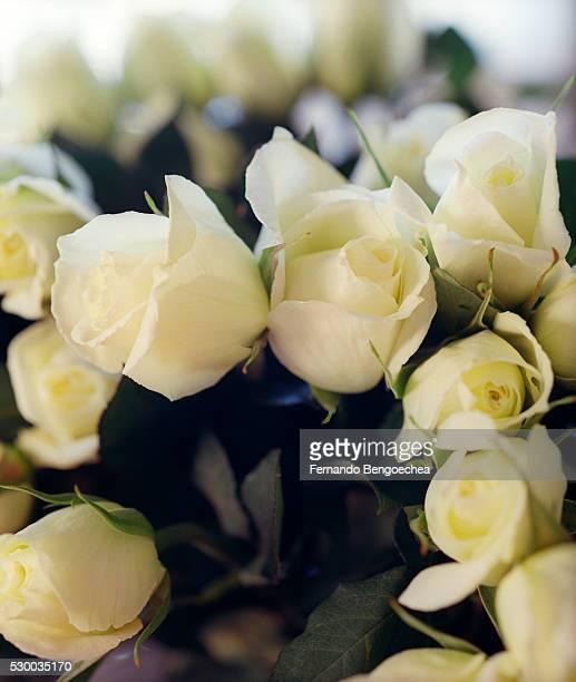 close up of a bunch of white roses - fernando bengoechea stock pictures, royalty-free photos & images