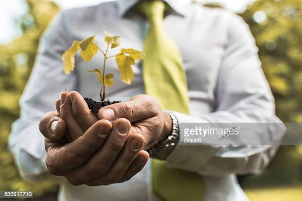 Close up of a businessman holding a plant in hands.