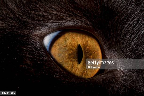 close up of a cat eye - animal eye stock pictures, royalty-free photos & images