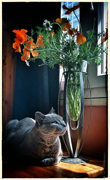 Close up of a cat lying next to vase