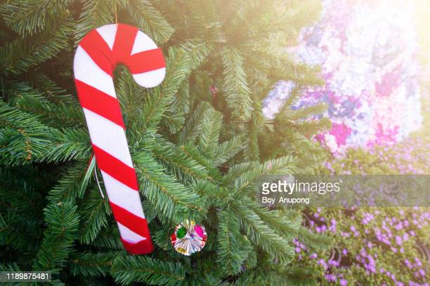 close up of a christmas candy cane hanging on a branch of christmas tree. - candy dolls fotografías e imágenes de stock