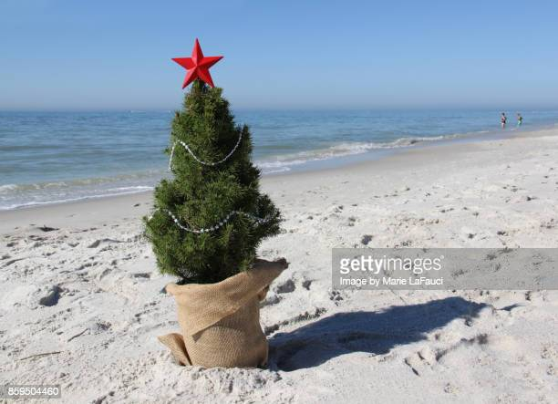 close up of a christmas tree at the beach - marie lafauci stock pictures, royalty-free photos & images