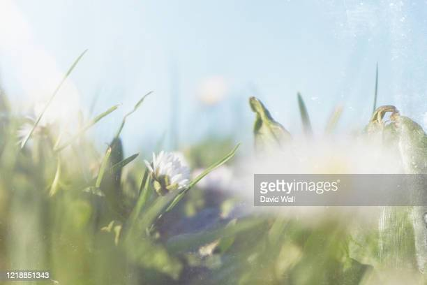 close up of a daisy framed against artistically blurred flowers and a blue sky. with an old textured vintage edit. - springtime stock pictures, royalty-free photos & images
