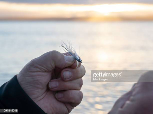 a close up of a fly fisherman tying a new fly onto his line in anticipation of catching another trout or salmon in salt water. - fly casting stock pictures, royalty-free photos & images