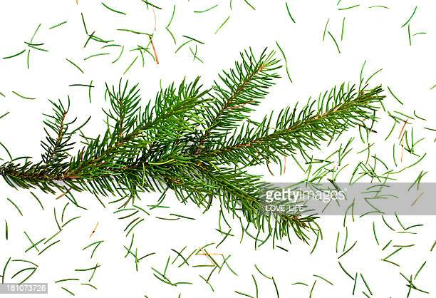 Close up of a fresh Christmas tree losing needles