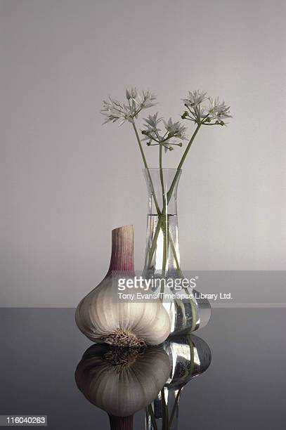 A close up of a garlic bulb next to a similarlyshaped vase holding garlic flowers 1983