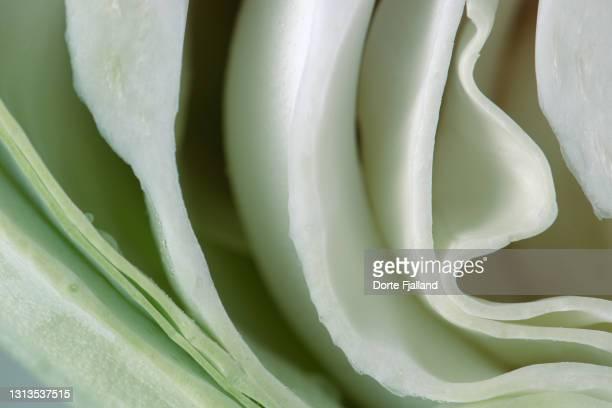 close up of a halfed white cabbage - dorte fjalland fotografías e imágenes de stock