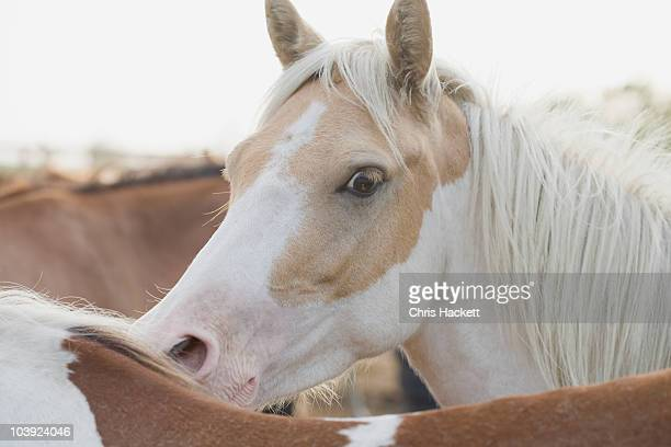 close up of a herd of horses - hackett stock photos and pictures
