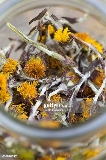 close up of a jar containing dried coltsfoot (tussilago farfara) stems and flowers. used in herbal medicine and food - coltsfoot stock photos and pictures