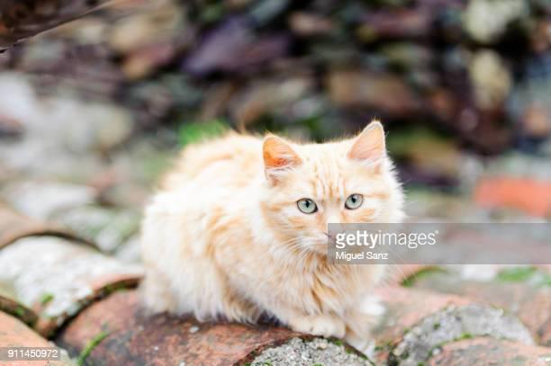 Close up of a kitten looking at camara