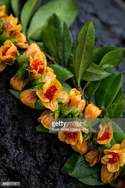 close up of a lei with orange and red flowers - hawaiian lei stock pictures, royalty-free photos & images