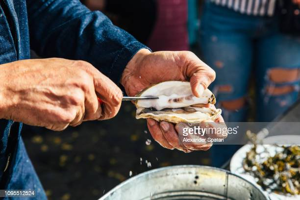 close up of a man opening oyster shell with a knife - seafood stock pictures, royalty-free photos & images