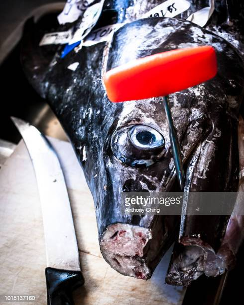 Close up of a Pacific Blue Marlin head on the chopping block