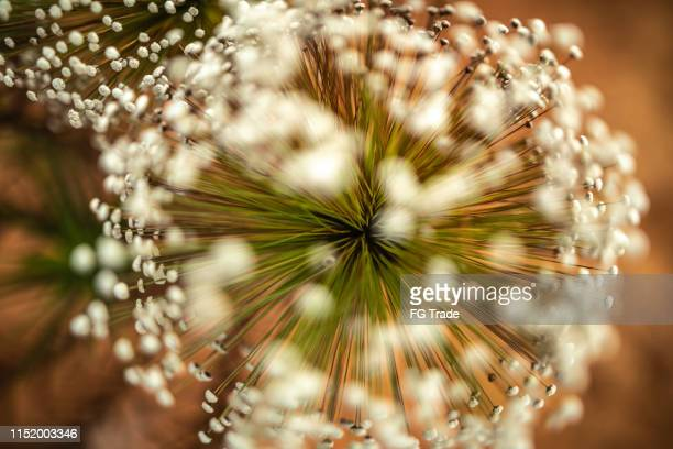 close up of a plant in sand dunes, jalapão - cerrado stock pictures, royalty-free photos & images