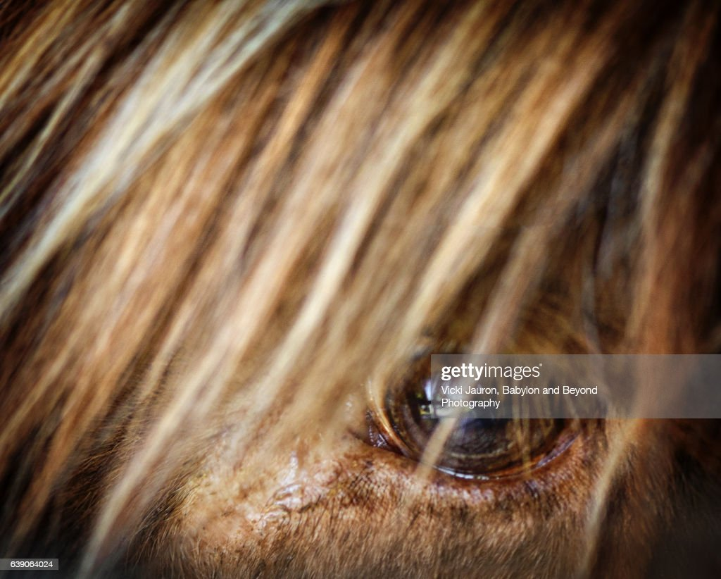 Close Up Of A Scottish Highlander Eye And Hair Stock Photo Getty - 24 detailed close ups of animal eyes