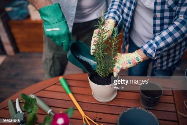 Close up of a Senior couple planting