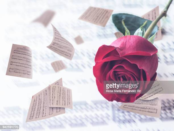 Close -up of a single red rose lays on blurred sheet music. Selective focus and copy space