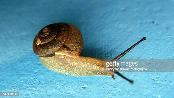 close up of a snail - hermaphrodite stock photos and pictures