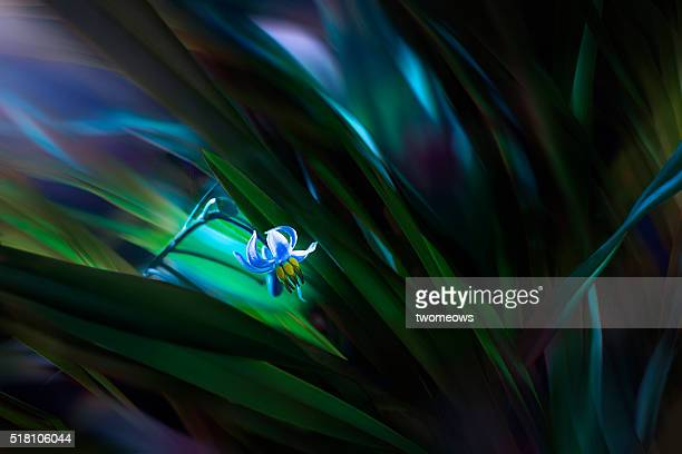 Close up of a tiny flower glowing in the dark.