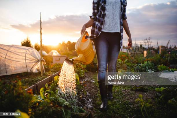 close up of a young african american woman watering the vegetables in her garden - simple living stock pictures, royalty-free photos & images