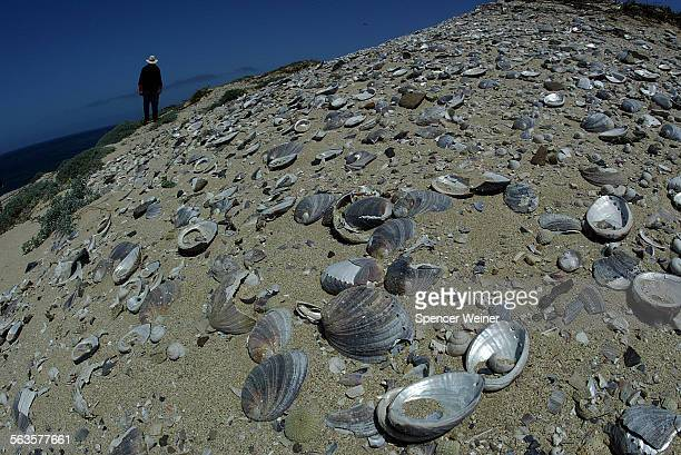 Close up of Abalone shells on Eastern shore of San Nicolas Island at site of Historic Indian village San Nicolas Island resident archeologist Steve...