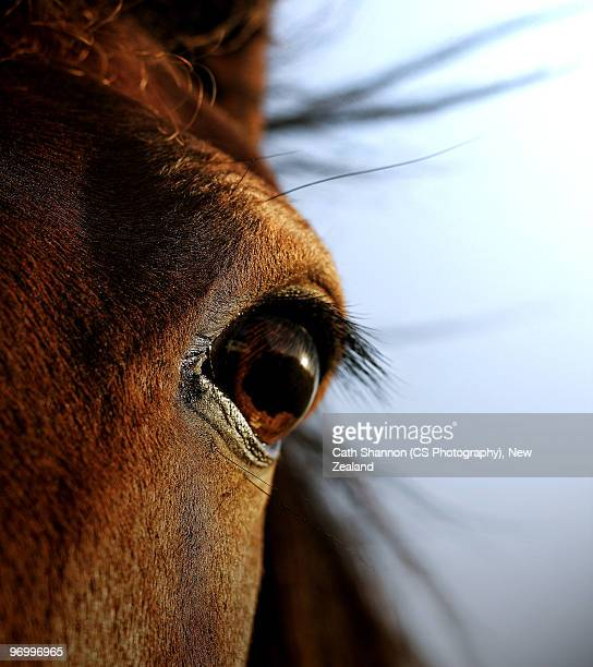 Close up of animal eye