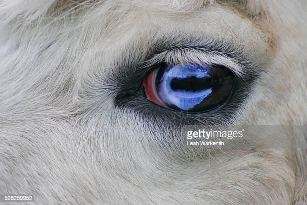 close up of animal's eye - leah wilde stock-fotos und bilder