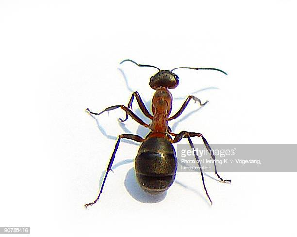 close up of  ant  - ants stock pictures, royalty-free photos & images
