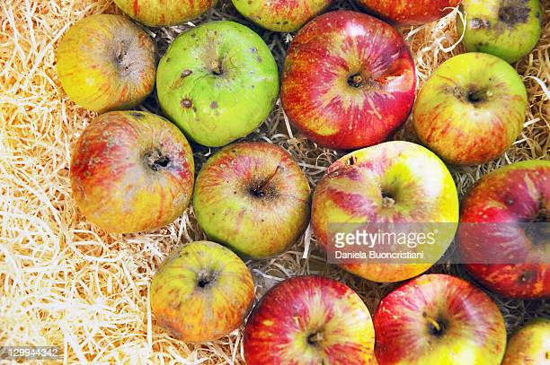 Close up of apples in hay