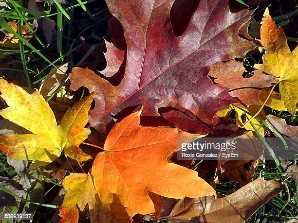Close Up Of Autumnal Leaves