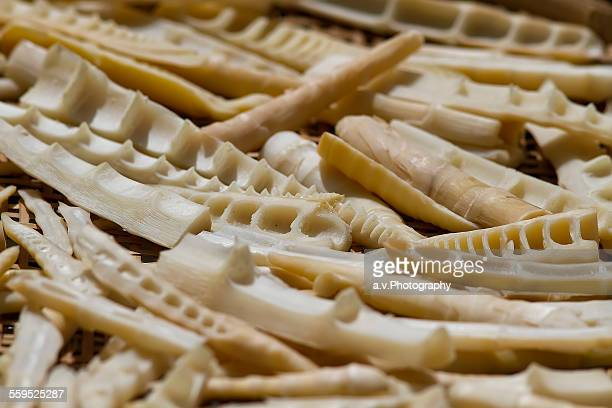 close up of bamboo shoots. - andre vogelaere stock pictures, royalty-free photos & images