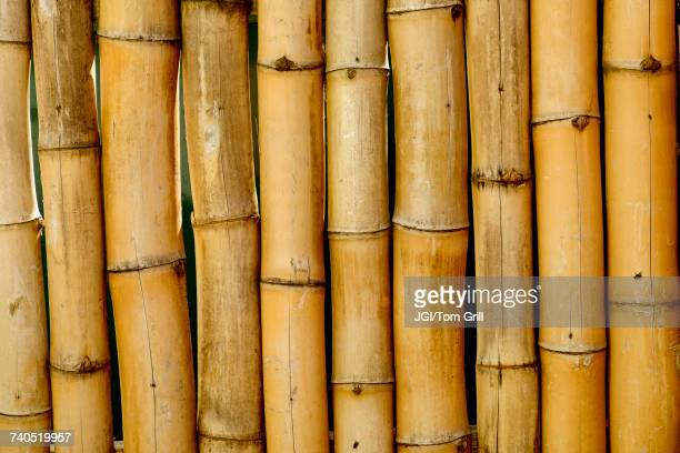 close up of bamboo stalks - medium group of objects stock pictures, royalty-free photos & images