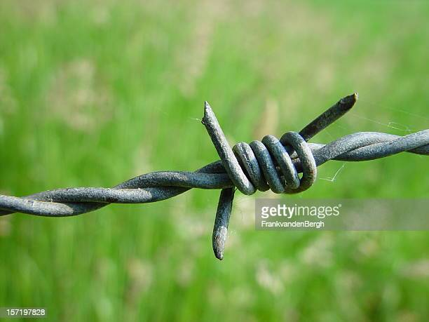 Close up of Barbed Wire wit a Green Background