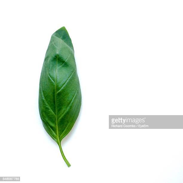Close Up Of Basil Leaf