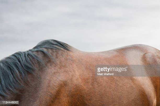 close up of bay horse's back - hairy bum stock pictures, royalty-free photos & images