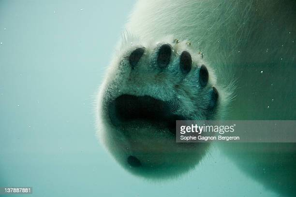 Close up of bear foot