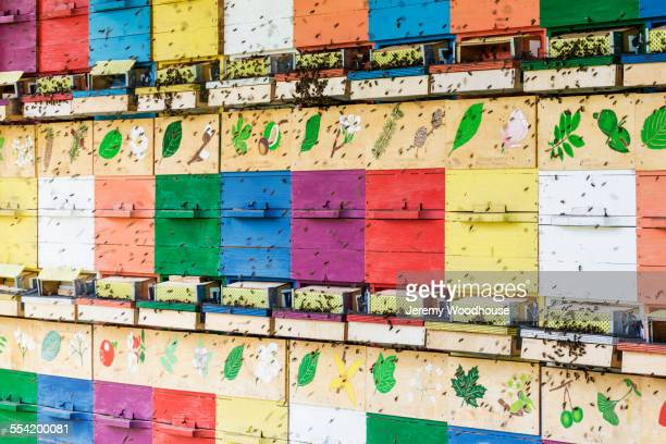 Close up of bees crawling on colorful beehive