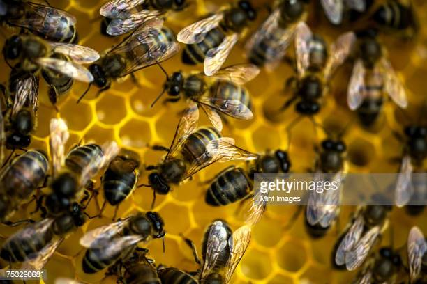 Close up of bees on top of honeycomb.