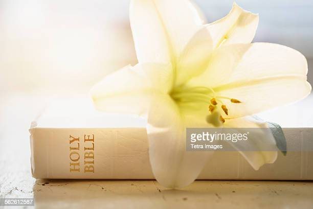 Close up of Bible and lily flower
