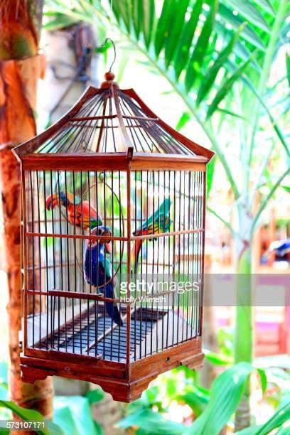 Close up of birds in birdcage