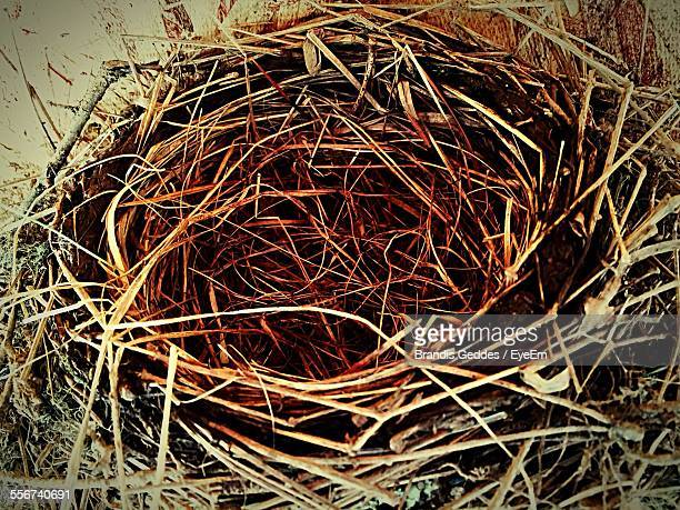 Close Up Of Birds Nest