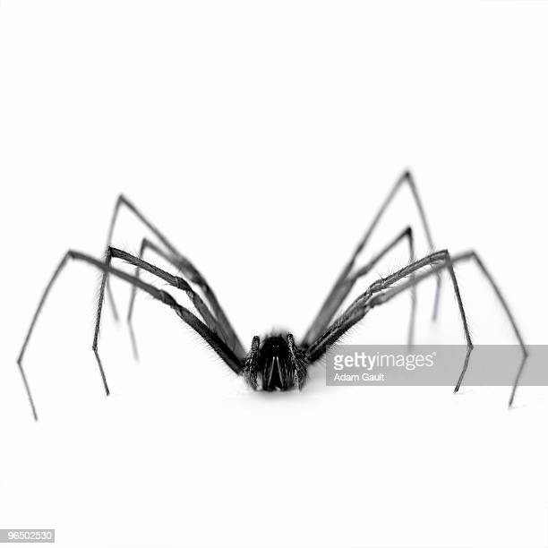 close up of black and white spider - spider stock pictures, royalty-free photos & images