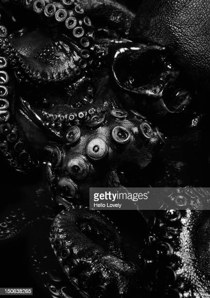 close up of black octopus - tentacle stock pictures, royalty-free photos & images