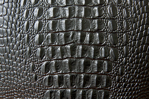 Close up of black snake or crocodile skin texture. large scales. for decoration and design 1080924988