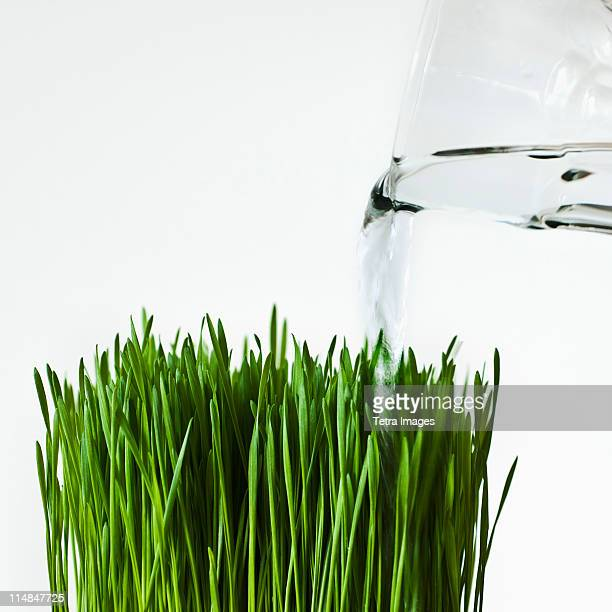 Close up of blade of grass being watered