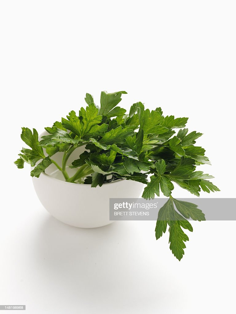 Close up of bowl of parsley : Stock Photo
