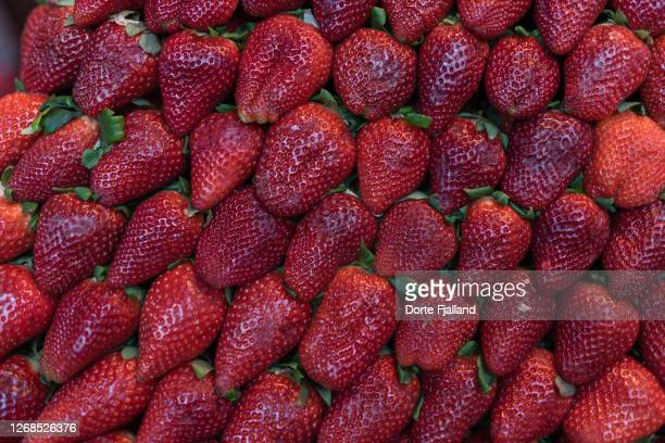 close up of bright red packed strawberries - dorte fjalland fotografías e imágenes de stock