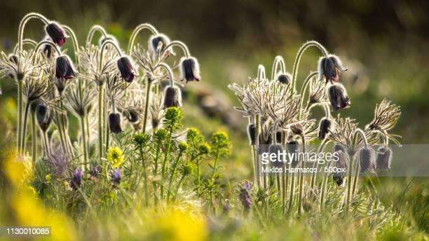 close up of bunch of wildflowers - mazzi fiori di campo foto e immagini stock