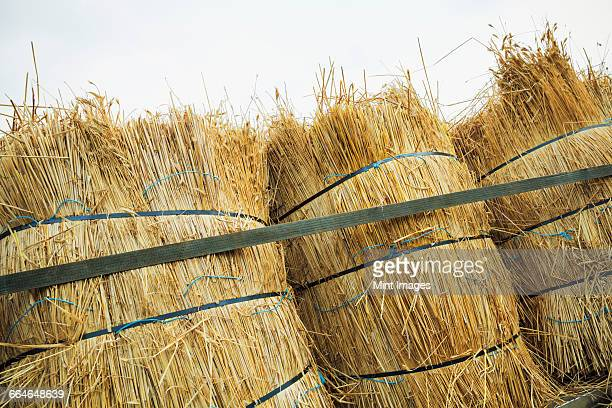 Close up of bundles of straw used for thatching a roof.